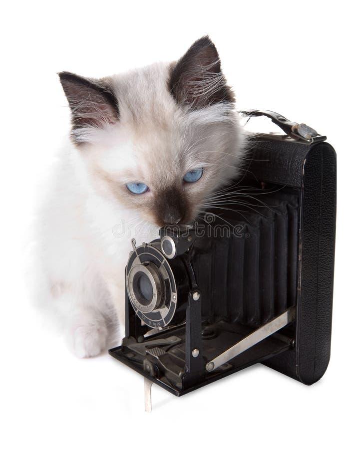 Appareil-photo et chaton photos stock