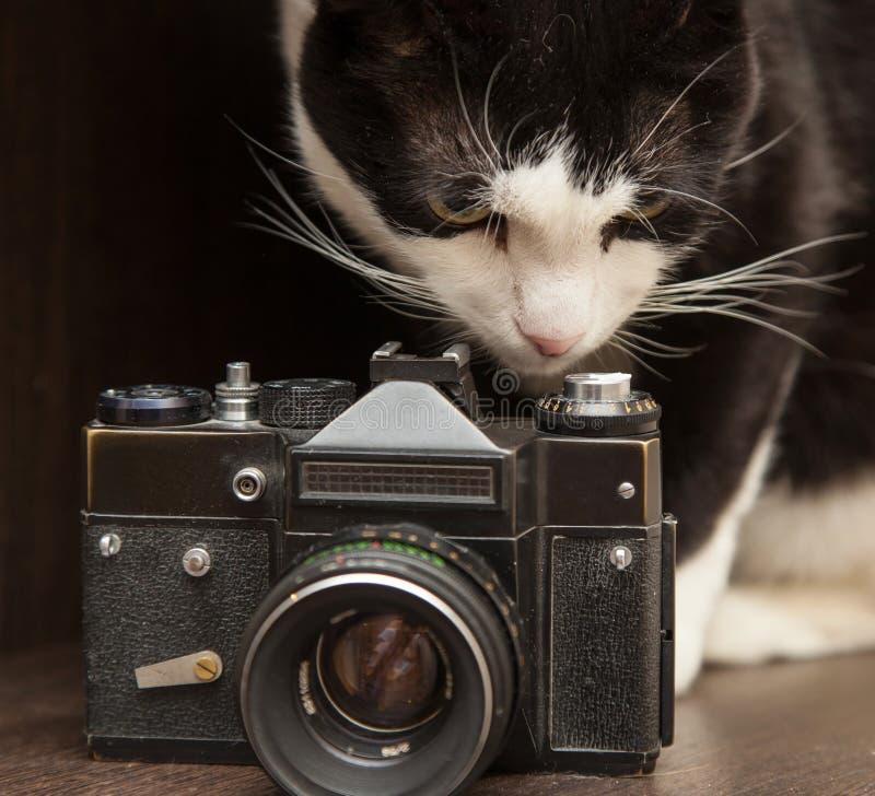Appareil-photo noir et blanc de chat et de photo de vintage photo libre de droits