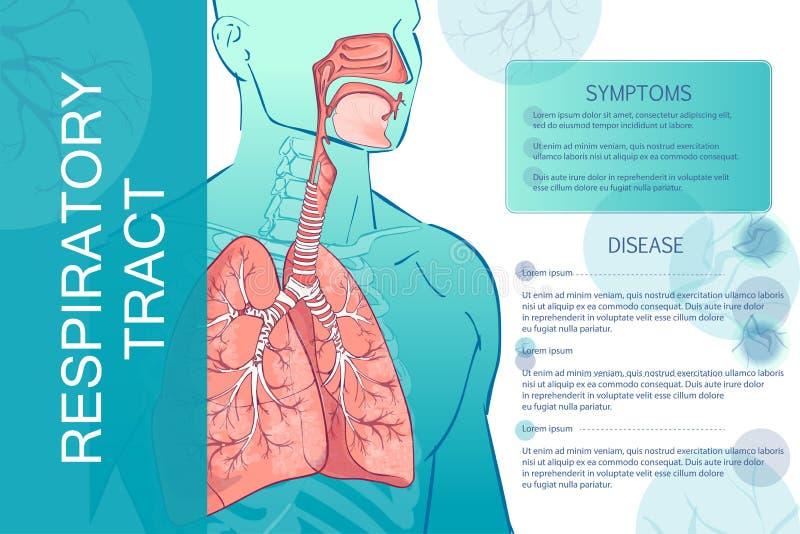 Appareil respiratoire humain de vecteur illustration de vecteur