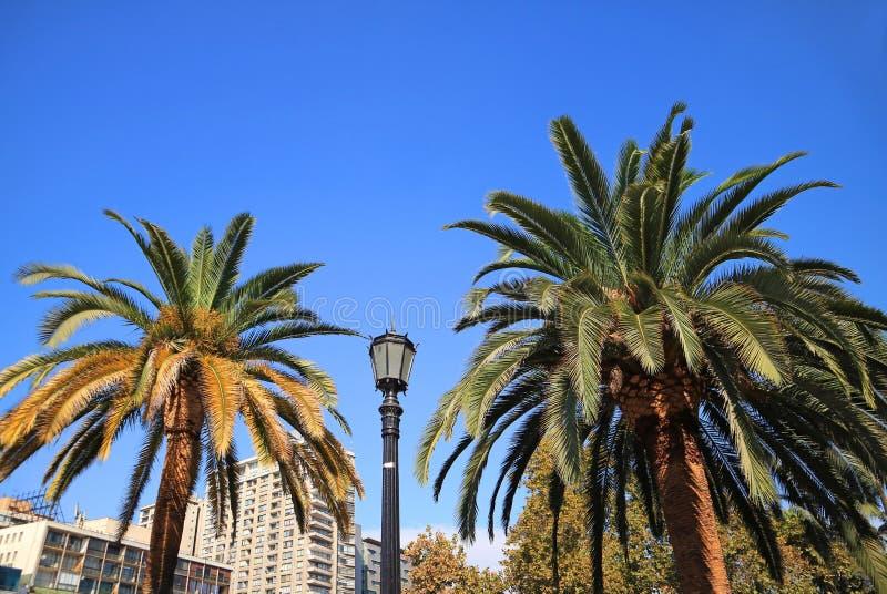 Appareillez des palmiers avec un lampadaire contre le ciel clair bleu vif image libre de droits
