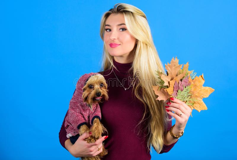 Apparel and accessories. Pet supplies. Dressing your dog for cold weather. Dogs need clothes. Which dog breeds should stock image