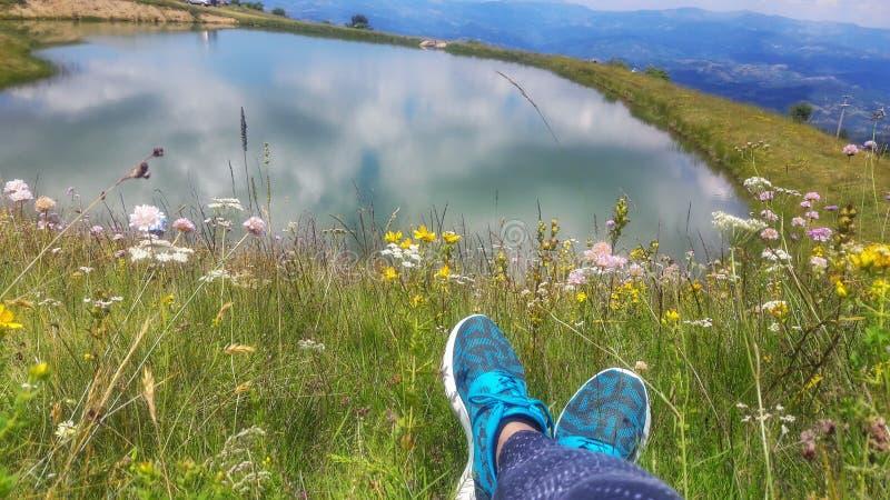 Appartengo fra i wildflowers immagini stock libere da diritti