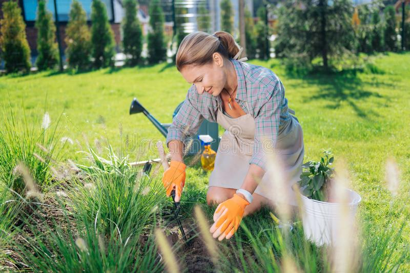 Appealing family woman sitting on her knees while grubbing up weeds. Grubbing weeds up. Appealing family woman wearing squared shirt and orange gloves sitting on royalty free stock photo
