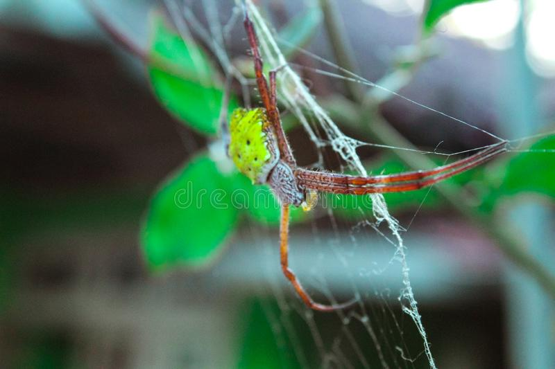 Nature - A spider and its nest stock photos