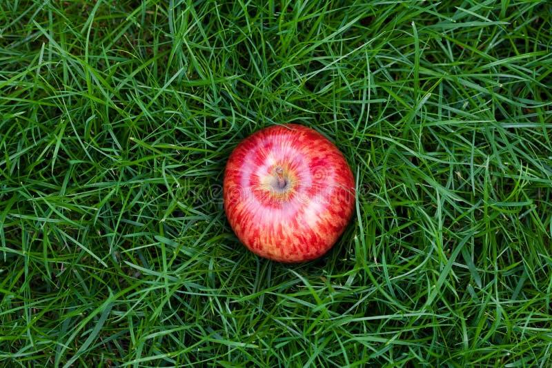 Appel die op groen gras ligt stock afbeelding