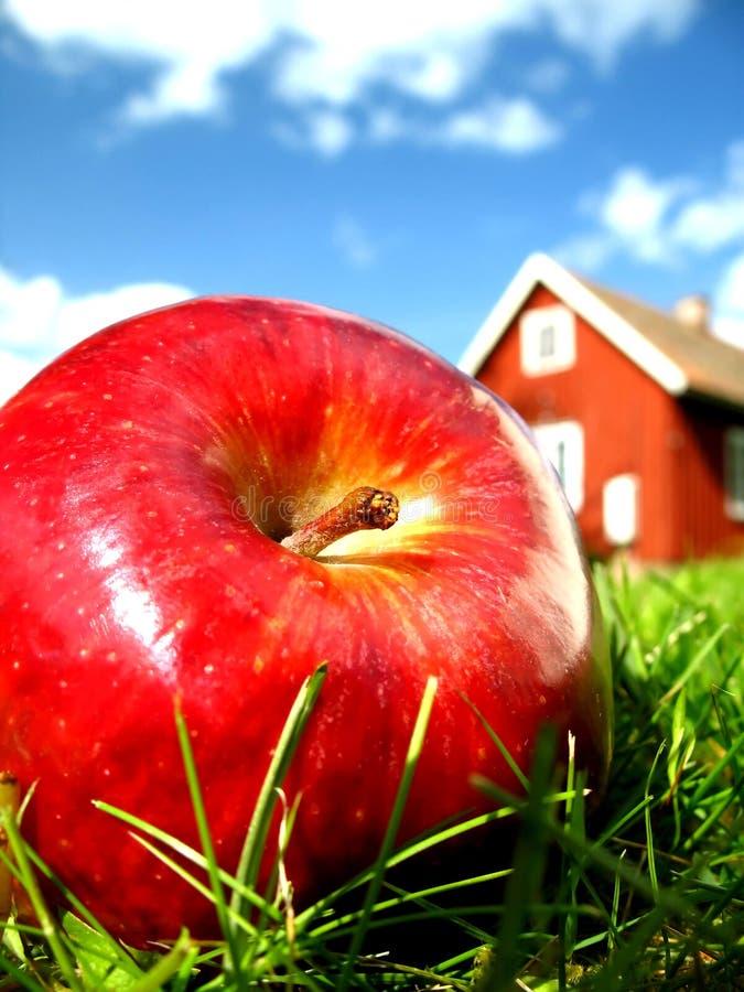 Appel in tuin 1 stock foto's