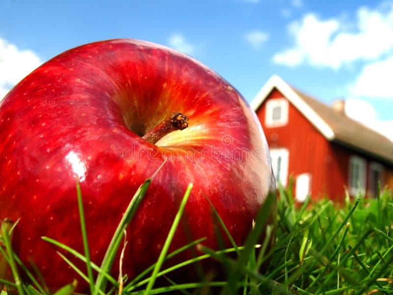 Appel in tuin 2 stock afbeelding