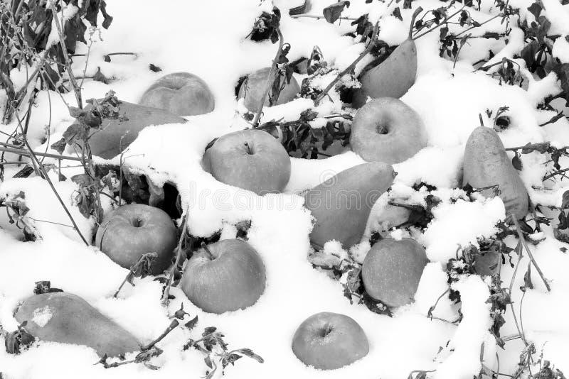 Appelen en peren in de sneeuw stock afbeelding