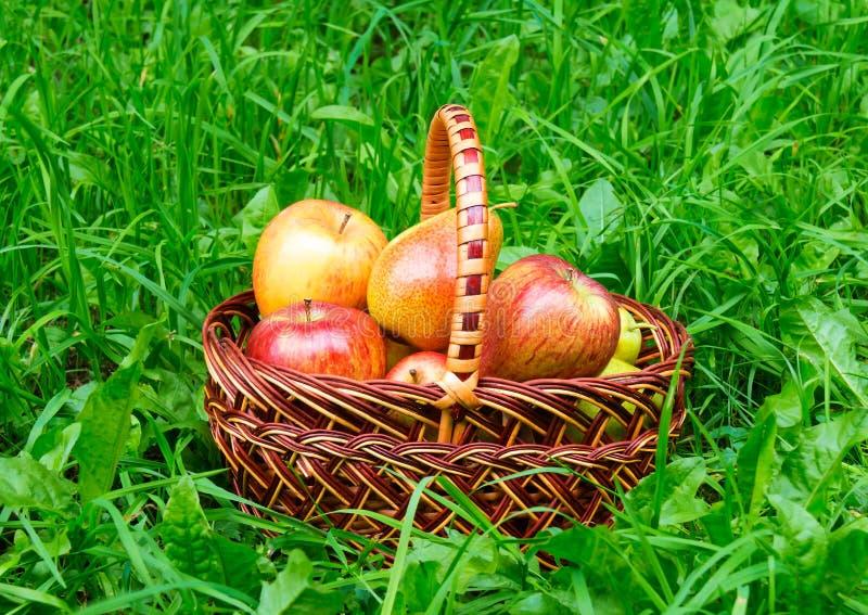 Appelen en peren in mand royalty-vrije stock foto's