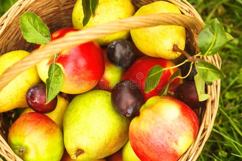 Appelen en peren op gras royalty-vrije stock foto's