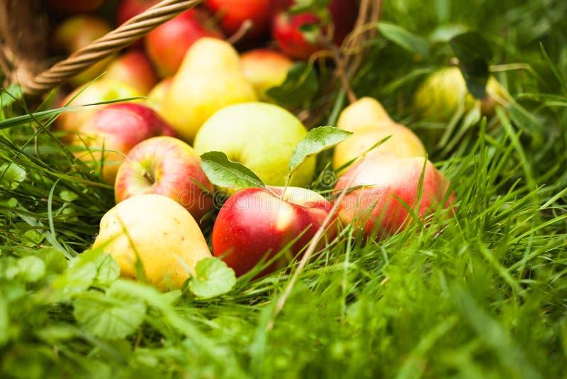 Appelen en peren op het gras royalty-vrije stock foto's