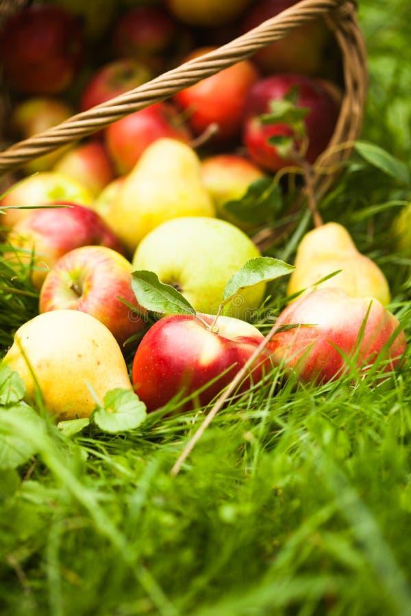 Appelen en peren op het gras stock afbeelding