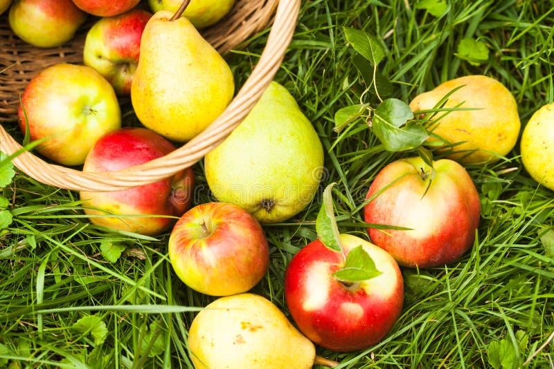 Appelen en peren op het gras royalty-vrije stock afbeeldingen