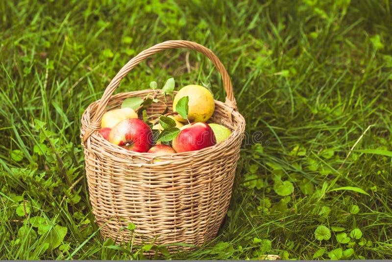 Appelen en peren op het gras royalty-vrije stock fotografie