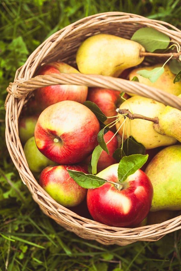 Appelen en peren op het gras stock foto