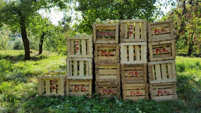Appelen in houten kratten stock afbeelding