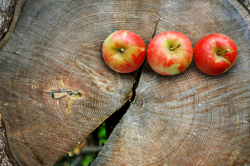 Appelen op de besnoeiing van de boomboomstam stock foto