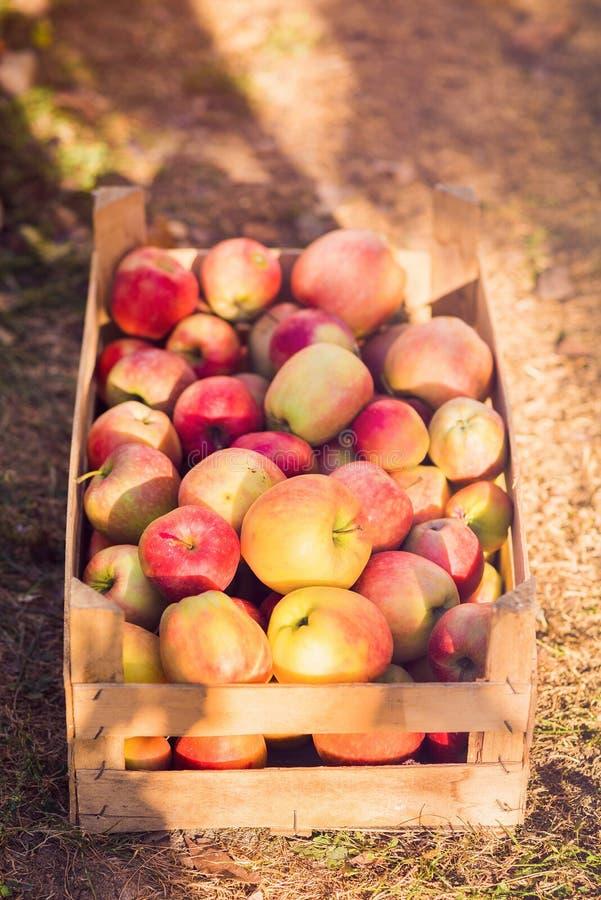 Appelen op houten kratachtergrond stock foto