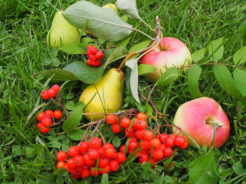 Appelen, peren, Lijsterbes in gazongras stock foto's