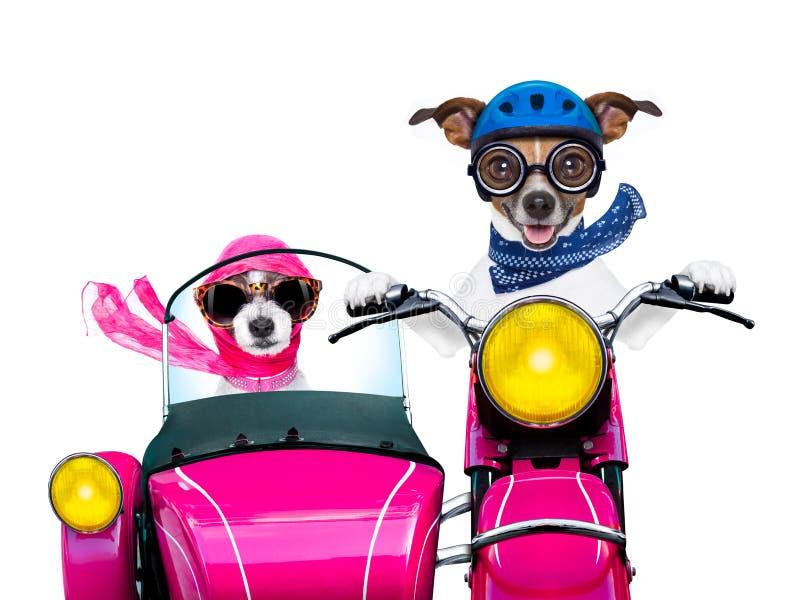 Appena cani sposati fotografie stock libere da diritti