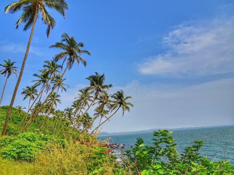 Appena le vibrazioni tropicali fotografia stock