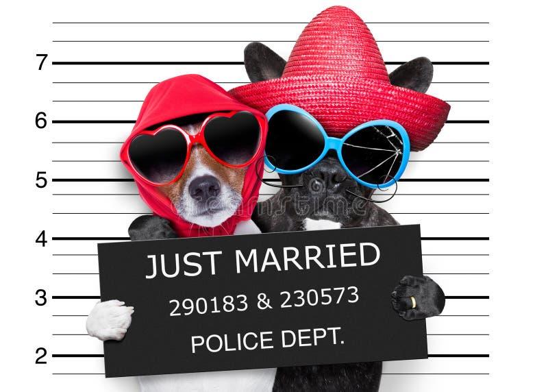 Appena mugshot sposato fotografia stock libera da diritti