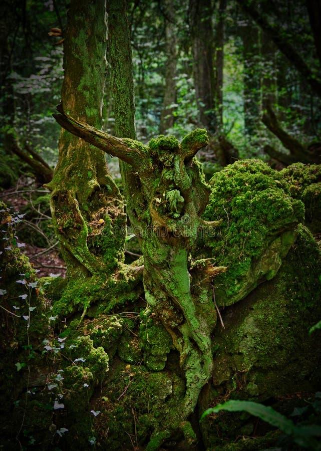 Appena un albero fotografia stock libera da diritti