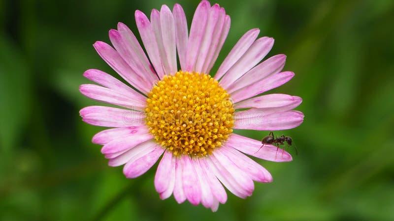 Appena un piccolo fiore immagine stock