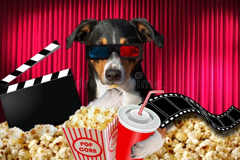 Appenzeller-Hund, der einen Film in einem Kinotheater aufpasst, wenn dem Soda und Popcorn Gläser 3d tragen lizenzfreies stockfoto
