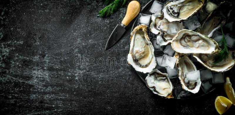 Appetitanregende rohe Austern mit Eiswürfeln und einem Messer lizenzfreie stockbilder