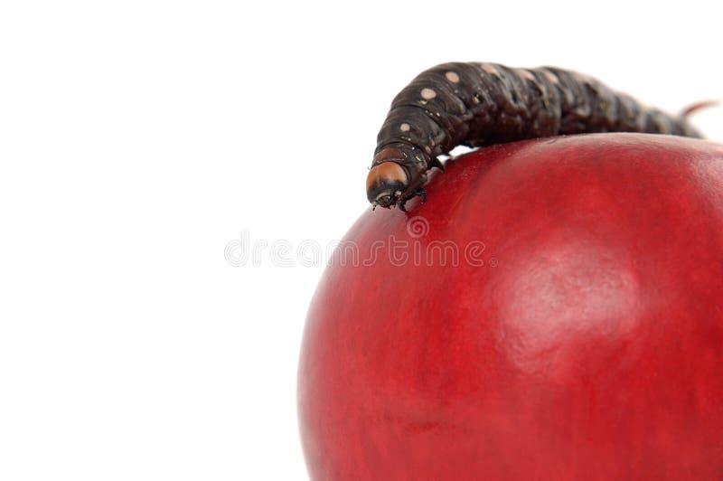 Appetizing Apple royalty free stock photo