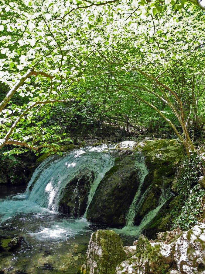 Applådera floden med den härliga flodingången i den gröna vårskogbågen av gröna trädfilialer ovanför floden crimean royaltyfria bilder