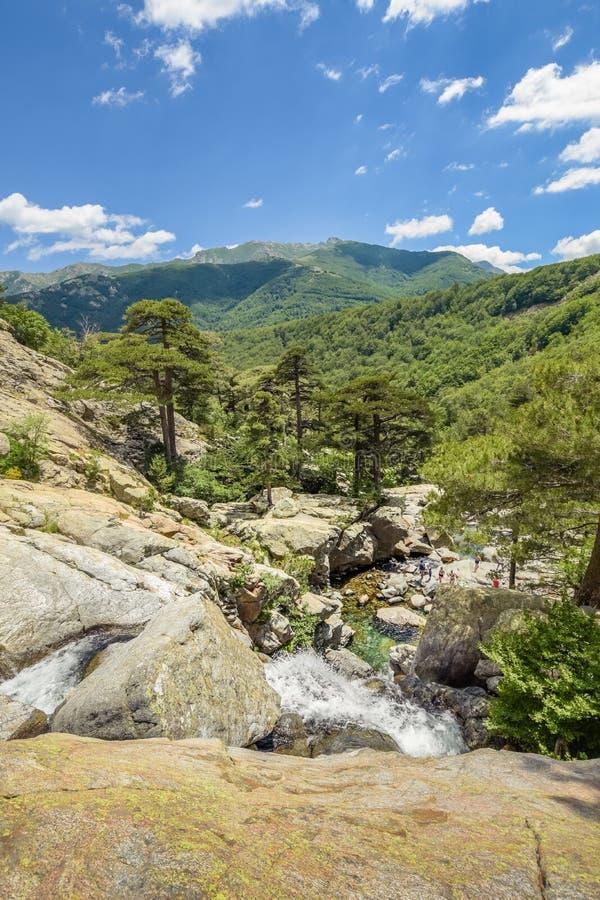 Applådera floden som mycket flödar till och med en skog av vattenfall arkivfoto