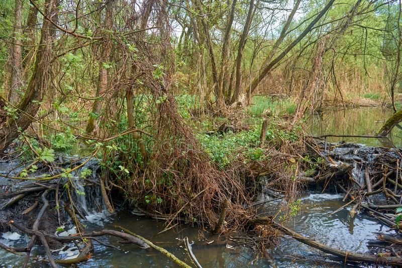 Appl?dera floden med h?rliga floding?ngar i skogen royaltyfri foto