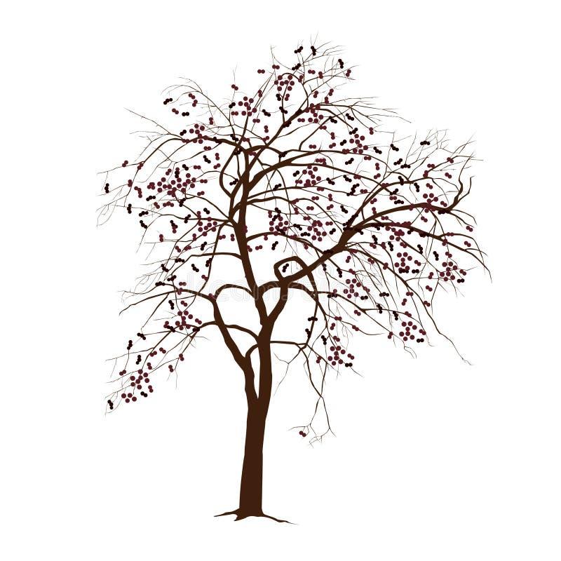 Apple-árbol En El Invierno Con Las Hojas Caidas Ilustración del ...