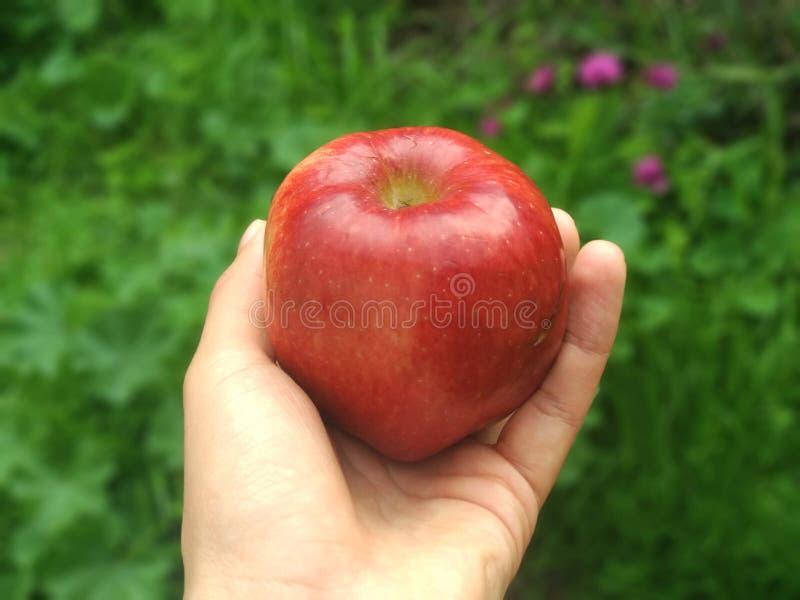 Apple υπό εξέταση στοκ εικόνα
