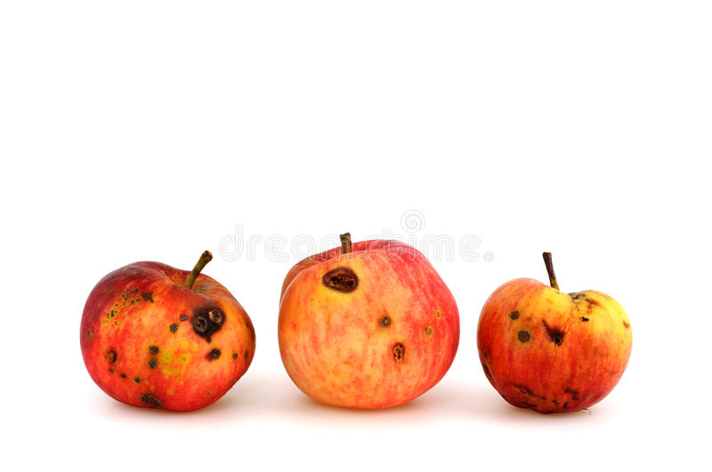 Download Apple stock image. Image of decomposed, eating, festered - 10027667