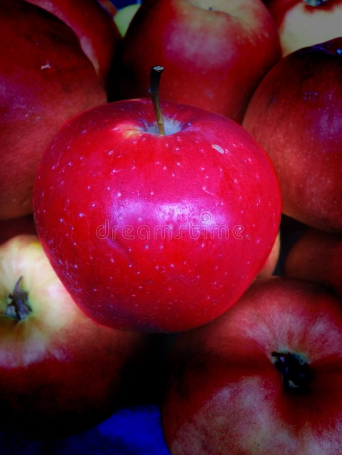Apple zdjęcia royalty free
