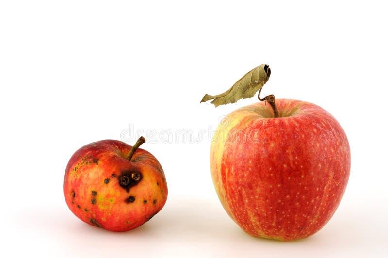 Download Apple stock photo. Image of putrid, full, ripe, apple - 6236200