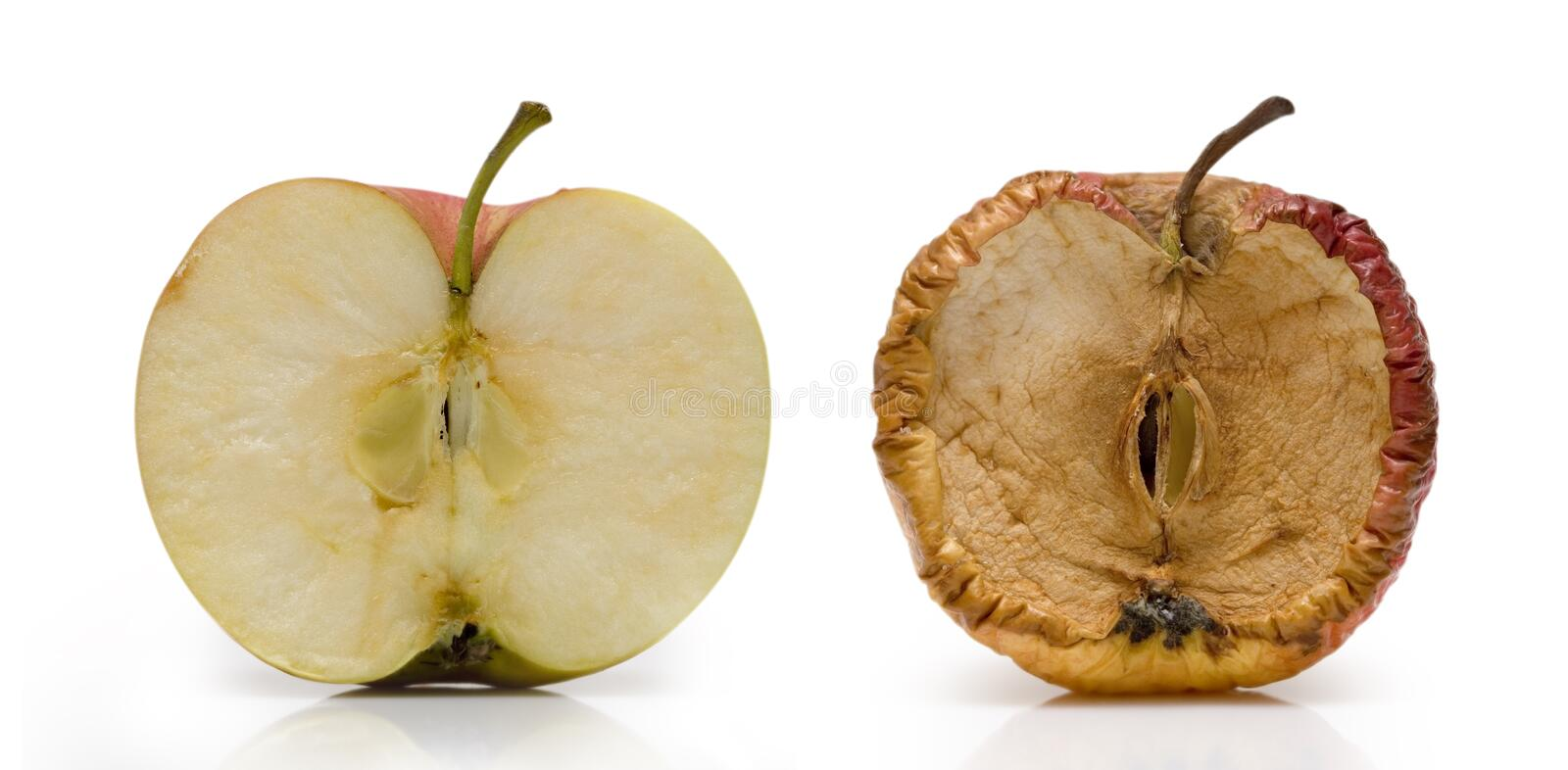 Apple. Two half of apple over white. Fresh and slice in decay stock illustration