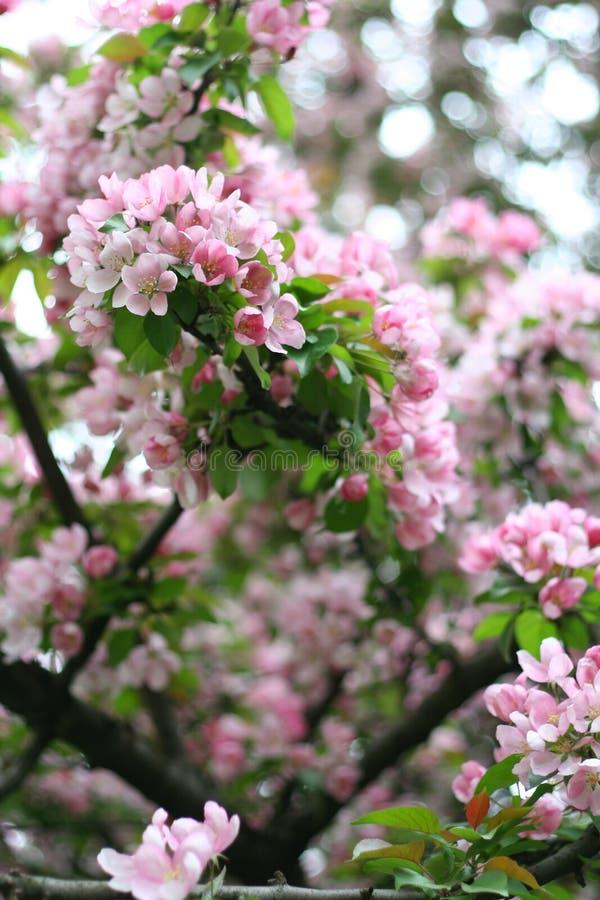 Apple-albero a colori fotografie stock libere da diritti