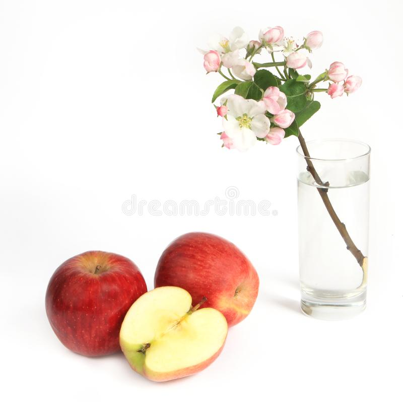 Apple with apple flowers royalty free stock photos