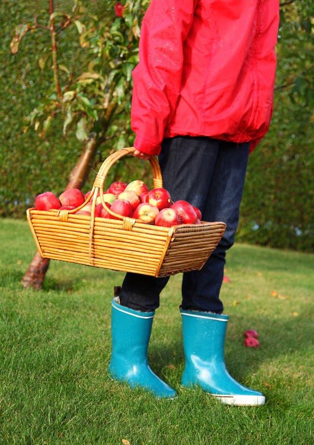 Apple autumn basket royalty free stock photos