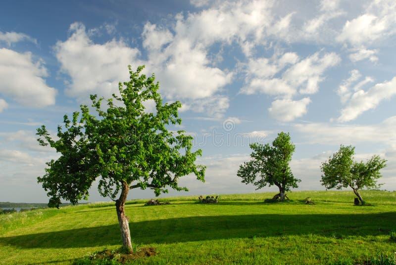 Apple-Bäume im Früjahr lizenzfreies stockfoto