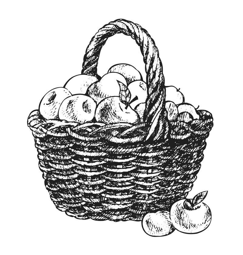 Apple basket drawing vector illustration