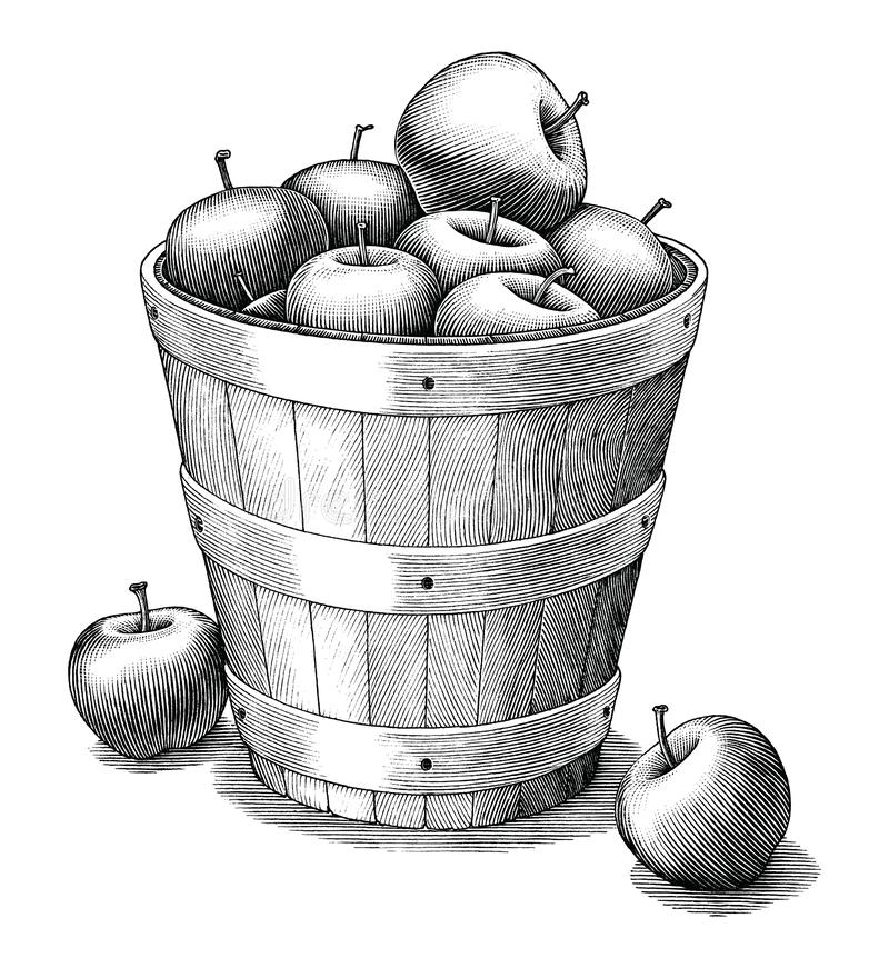 Apple in basket hand drawing vintage style black and white clip art isolated on white background. Natural product of vitamin royalty free illustration