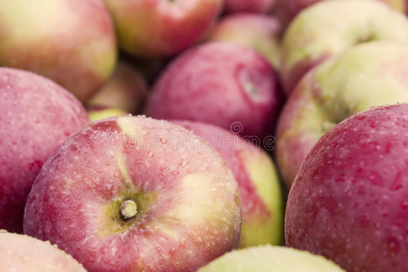 Download Apple bin stock photo. Image of lifestyle, snack, group - 20036534