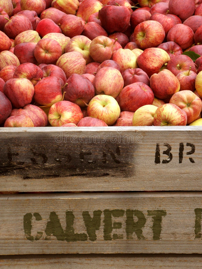 Download Apple Bin stock image. Image of wooden, close, juicy, apples - 7788527