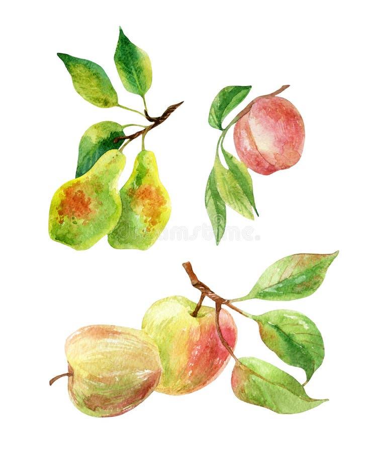 Apple-, Birnen- und Pfirsichniederlassungen mit Blättern und Früchten im Aquarell lizenzfreie abbildung