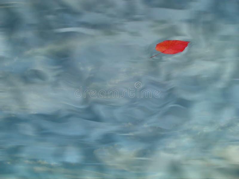 Download Apple-Blatt im Pool stockbild. Bild von yard, blätter, auszug - 46479